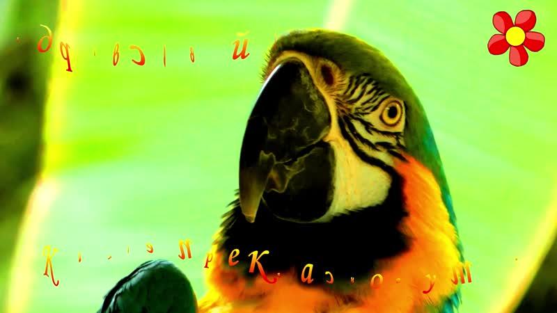 С ДОБРЫМ УТРОМ Доброе утро Хорошего дня ОЧЕНЬ КРАСИВОЕ ПОЖЕЛАНИЕ ДОБРОГО УТРА Музыкальная открытка mp4