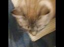 кот срет под дапстеп.mp4