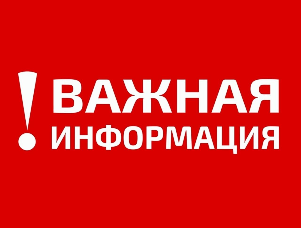 12 и 13 марта в Петровске будут отлавливать бездомных животных