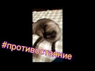 Проект_01-10(1)_SD