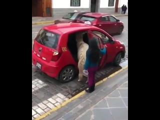 Обычное такое такси в Перу 😅