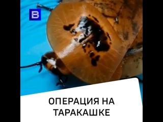 Операция на таракашке