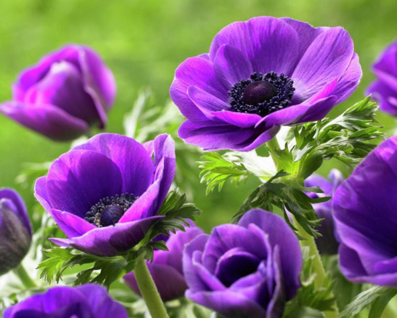 Цветущий подоконник круглый год., изображение №5