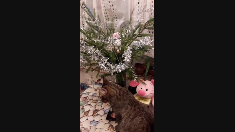 Саймон обнюхивает подарочки