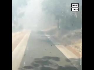 Дорога через лесной пожар близ Перта (Австралия, ).