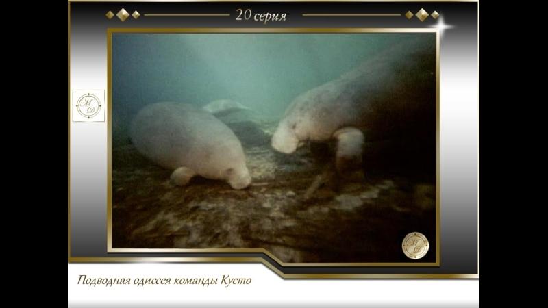 Подводная одиссея команды Кусто Выпуск 20 Последние сирены 20 1971
