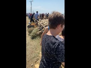 Видео от Мусы Габибова