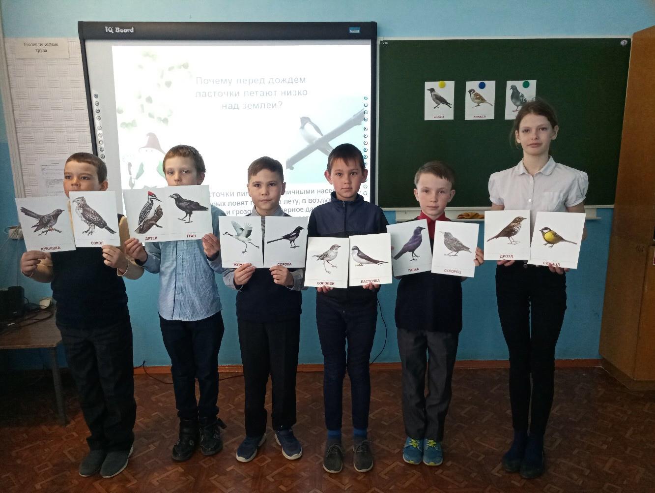 Обучающиеся с картинками о птиц