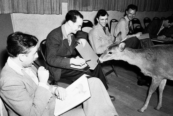 Как создавали Бэмби В 1942 году для аниматоров Disney организовали интересную встречу. В студию привезли настоящего оленя, чтобы художники смогли достоверно изобразить движения животного для