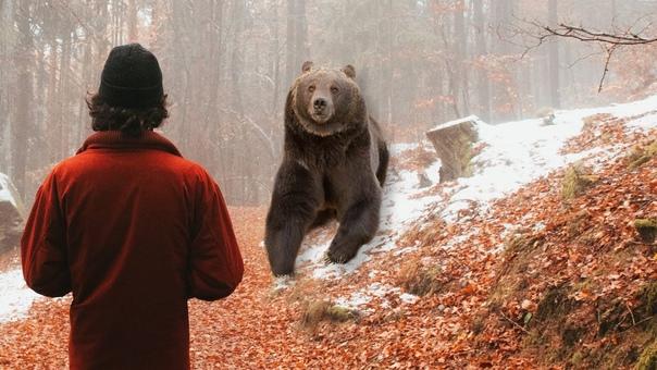 В Тюменской области боксер убил медведя, который р...