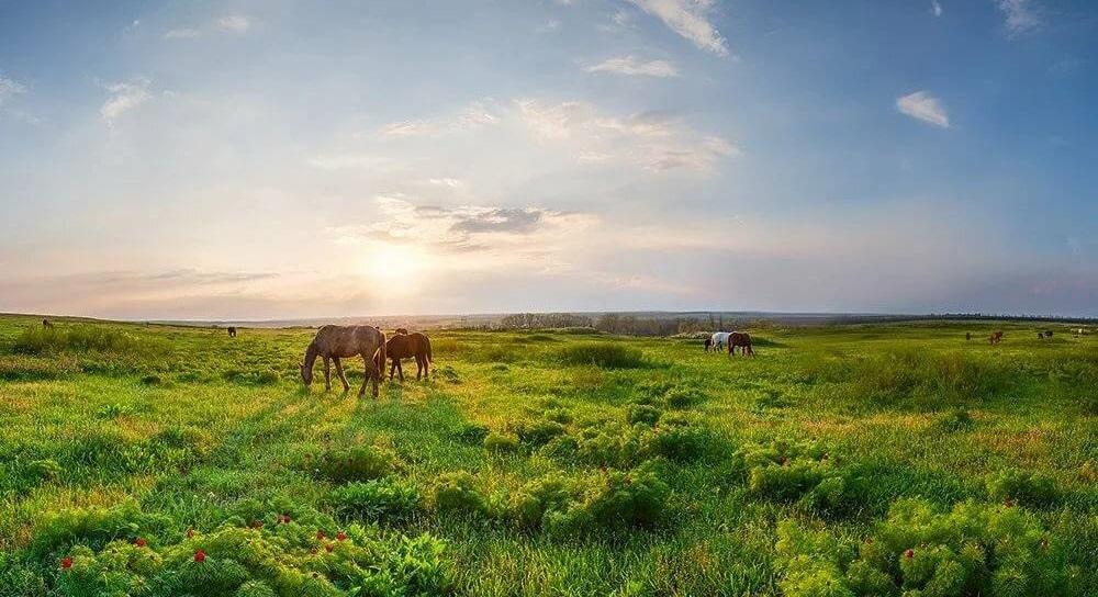 Документальный фильм «Там, где я родился, там моя земля!», созданный к 95-летию заповедника «Хомутовская степь»