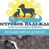 """Приют для собак """"Островок надежды"""" (СПб)"""