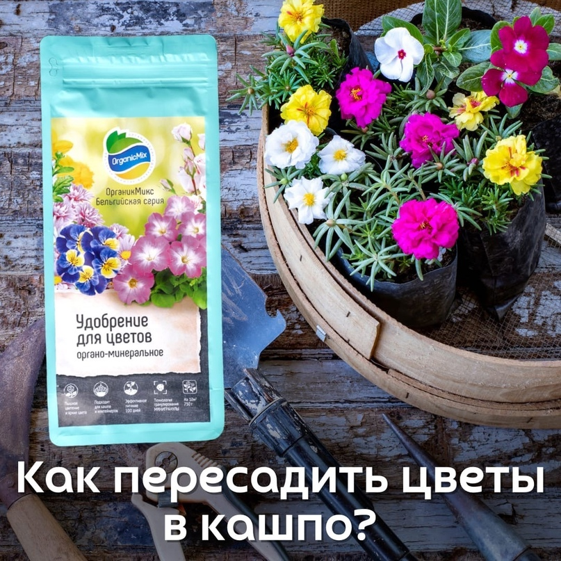 🪴Как пересадить цветок в кашпо?🌺