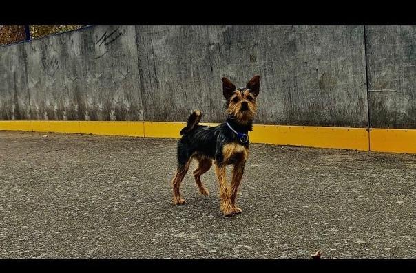 Пропала собака , район Маяка. Нашедшему- вознаграж...