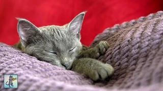 Adorable Sleepy Cats! ~ Cute Kittens & Relaxing Piano Music 🐈