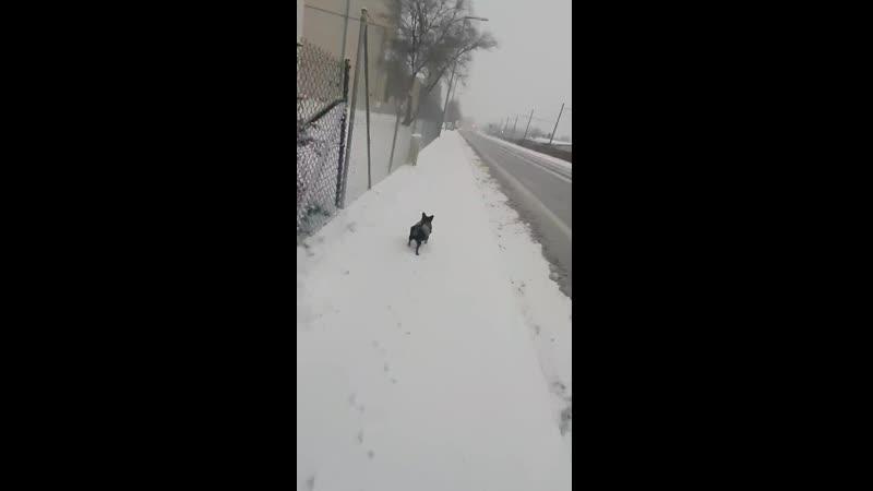 Снег в Мюнхене