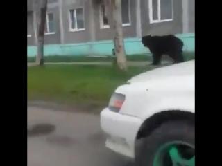 Ничего необычного, просто мишка пошёл в магазин)