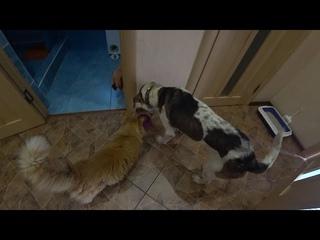 Собака и Кот ! Палкан ворует еду у Кузи #Кот #Собака