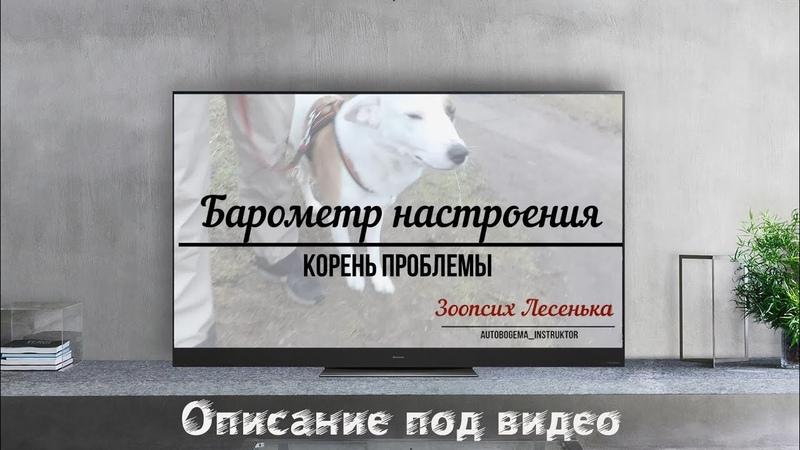 Собака это барометр Вашего настроения Корень проблемы