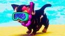 СИМУЛЯТОР Маленького КОТЕНКА 5 Плавающая кошка на Пляже Play With Gilber на ПУРУМЧАТА