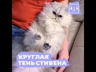 Котик Эрик обожает сидеть на своем хозяине