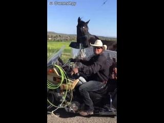 Как перевезти лошадь на мотоцикле
