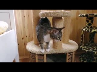 И еще немножко про приютских котов