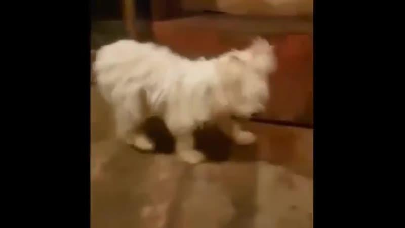 Собаки взаперти Адский дом