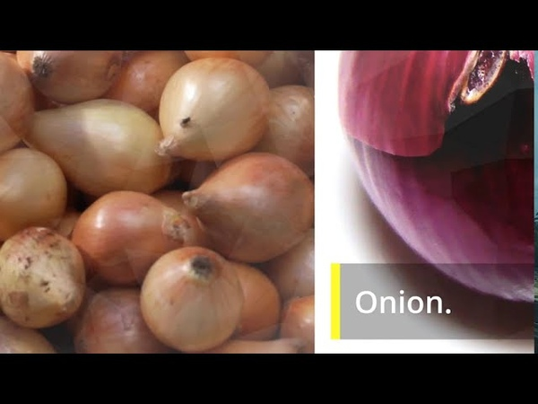With This Trick Onion Will no Go Bad